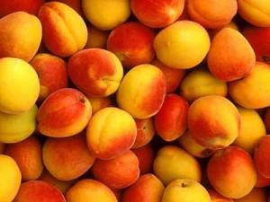 Из чего состоят плоды абрикоса