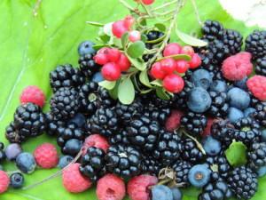 Сбор и заготовка плодов и ягод