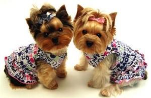 Выбираем правильную одежду для собаки
